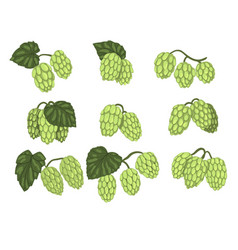 Hand drawn set of green hop cones branches vector