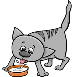 Kitten drinking milk vector