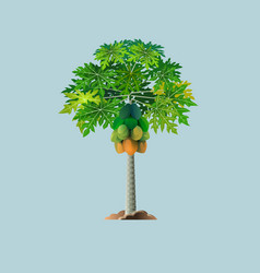 pepaya tree vector image