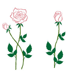 Rose with buds contour vector
