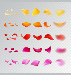 set of rose petals vector image