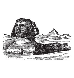Sphinx andro-sphinxes vintage engraving vector