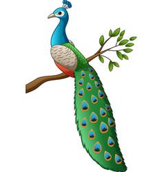 cartoon cute peacock on a branch vector image