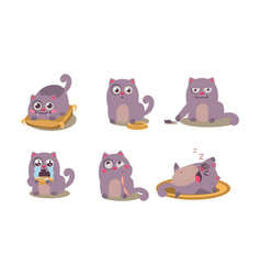 Cute grey cat set funny animal character in vector