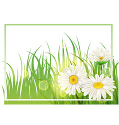 Spring flower daisy juicy chamomiles green grass vector