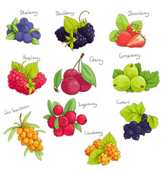 Sweet berries set vector