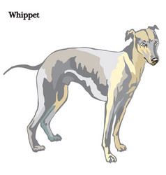 whippet vector image