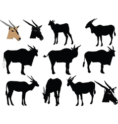 antelope collection - vector image