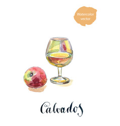 Glass of calvados with red apple vector