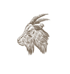 Goat head abstract isolated vector