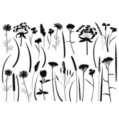 Herb and field flowers silhouette set vector