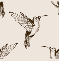 humming bird seamless pattern engraving vector image