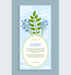 olibanum leaves and flower vector image