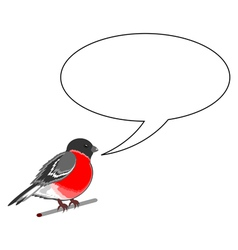 A funny bullfinch with a chatting bubble vector image
