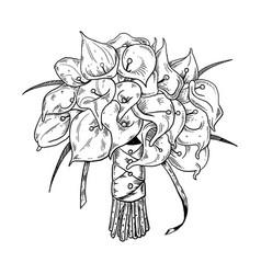 Calla flowers engraving vector