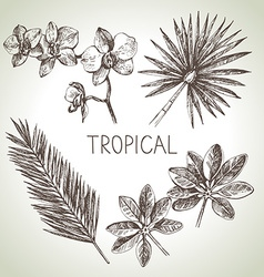 Hand drawn sketch tropical plants set vector image