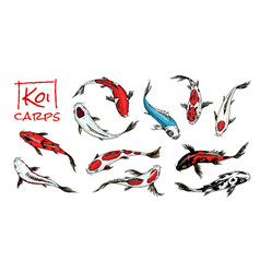 Set of koi carps japanese fish on white vector