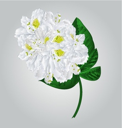 Twig white rhododendron mountain shrub vector