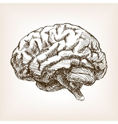 Human brain sketch style vector image