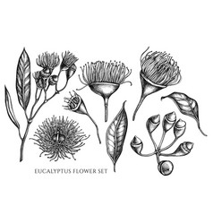 Collection of hand drawn black and white vector