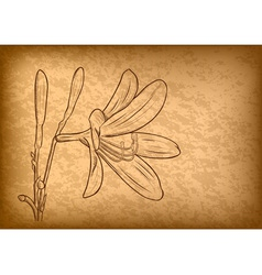 flower on the brown paper vector image vector image