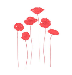 red poppies concept vector image
