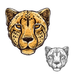 Cheetah muzzle african wild animal icon vector