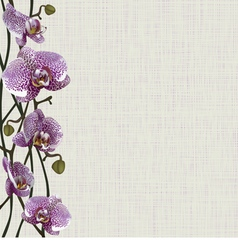 Pale background with purple orchid flowers vector image