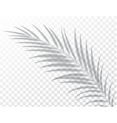 Shadows overlay effects mock up leaf palm vector