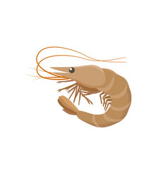Shrimp in flat design isolated vector