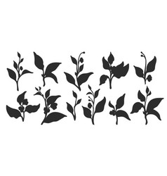 silhouette set branches vector image