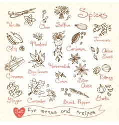 Set drawings of spices for design menus recipes vector image