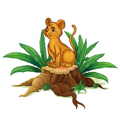 A young tiger sitting above the wood vector image