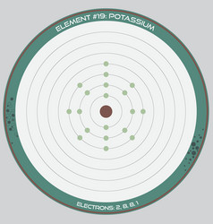 detailed infographic potassium vector image