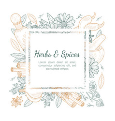 herbs and spices banner template with natural vector image