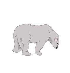 white bear stands vector image