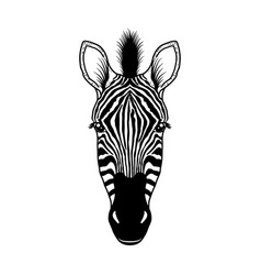 zebra head on white vector image
