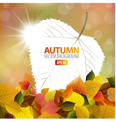 Autumn background with a card vector