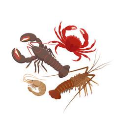 Crustaceans set in flat vector