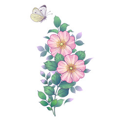 hand drawn dog-rose branch and flying butterfly vector image