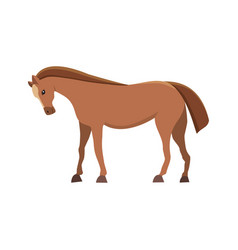 isolated horse cute cartoon farm anima vector image