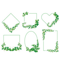 Ivy green leaves frames borders from evergreen vector