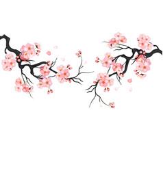 japanese cherry sakura tree isolated background vector image