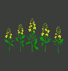 Canola mustard color plant organic set vector