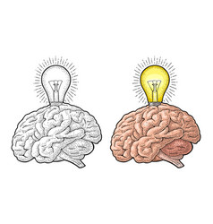 Human anatomy brain and glowing light incandescent vector
