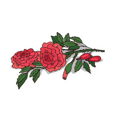 Isolated clipart rose vector