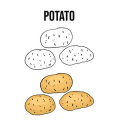 potato tuber vegetable on a white background vector image