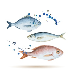 Watercolor fish vector
