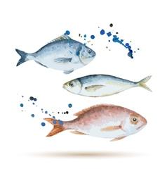 Watercolor fish vector image