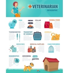 Colorful Vet Infographic Concept vector image